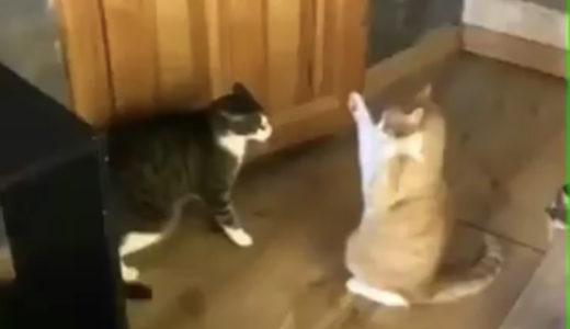 【猫動画】弱え